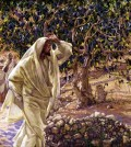 Accursed Fig Tree by James Tissot http://freechristimages.org/biblestories/jesus_curses_the_tree.htm